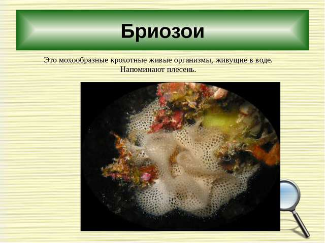 Бриозои Это мохообразные крохотные живые организмы, живущие в воде. Напоминаю...