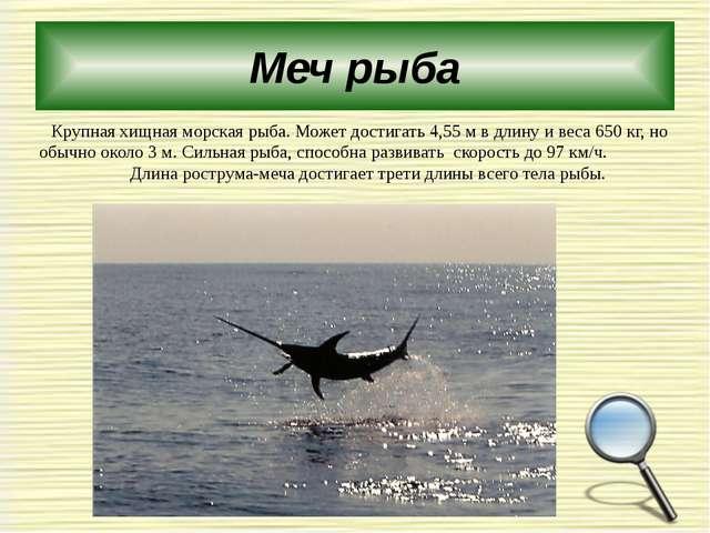 Меч рыба Крупная хищная морская рыба. Может достигать 4,55м в длину и веса 6...