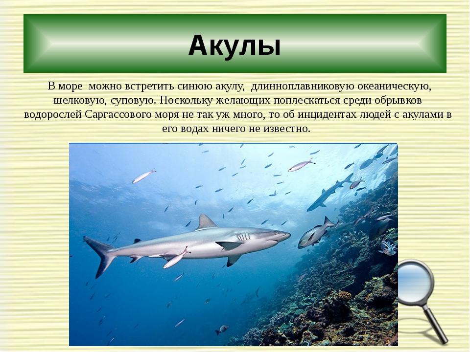 Акулы В море можно встретить синюю акулу, длинноплавниковую океаническую, шел...