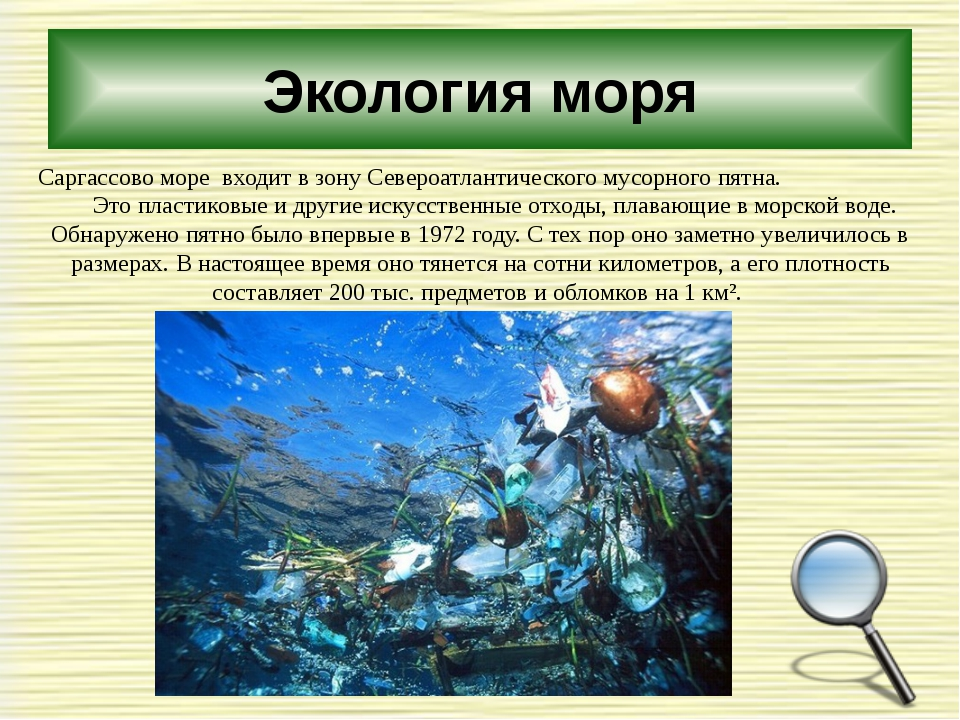 Экология моря Саргассово море входит в зону Североатлантического мусорного пя...