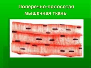 Поперечно-полосотая мышечная ткань