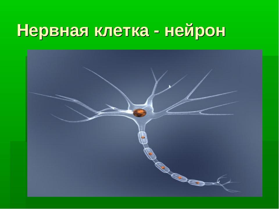 Нервная клетка - нейрон