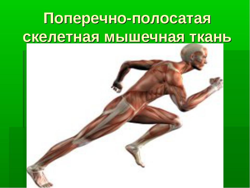 Поперечно-полосатая скелетная мышечная ткань