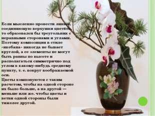 Если мысленно провести линию, соединяющую верхушки цветков, то образовался бы
