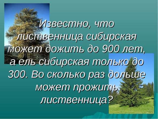 Известно, что лиственница сибирская может дожить до 900 лет, а ель сибирская...