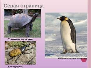 Слоновая черепаха Жук-геркулес Императорский пингвин Серая страница