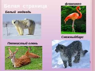 Белый медведь Снежныйбарс фламинго Пятнистый олень Белая страница