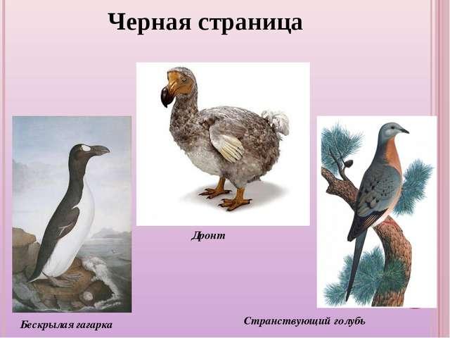 Черная страница Бескрылая гагарка Странствующий голубь Дронт