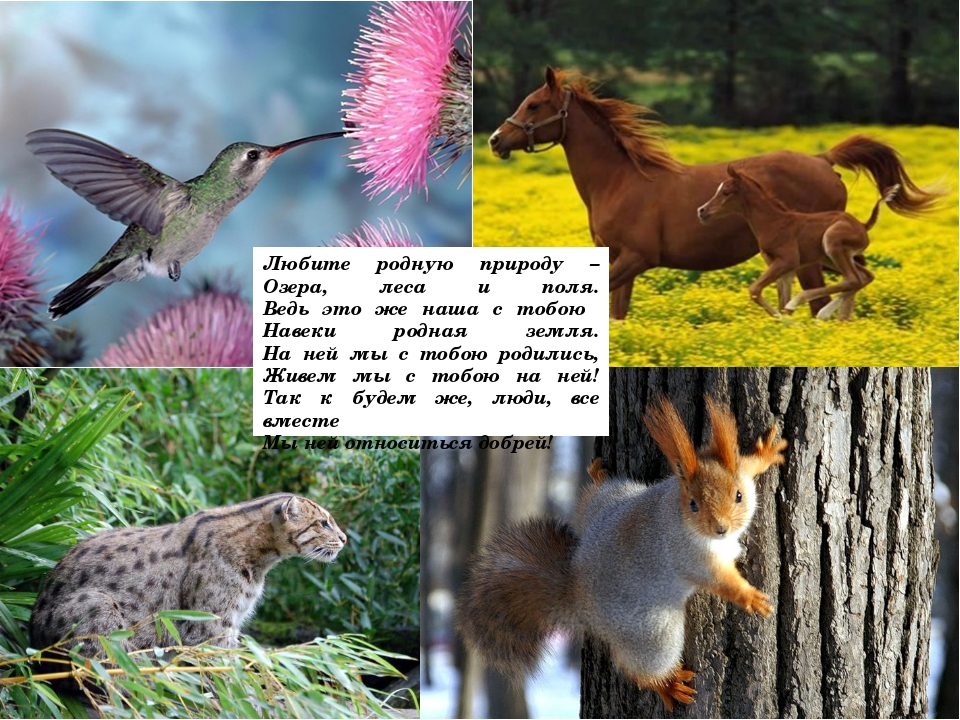 Любите родную природу – Озера, леса и поля. Ведь это же наша с тобою Навеки р...