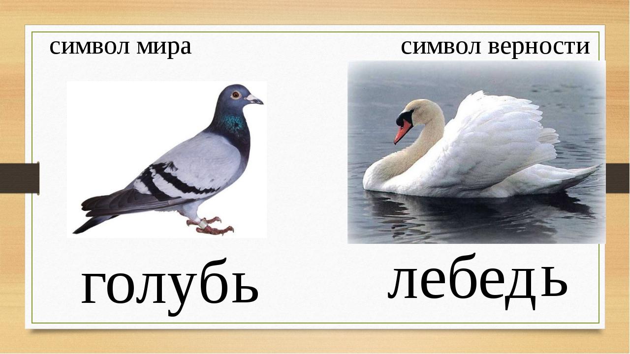 символ мира символ верности голуб лебед ь ь Что вы знаете об этих птицах? Со...