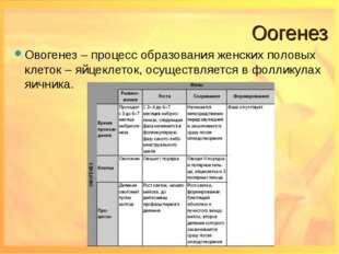 Оогенез Овогенез – процесс образования женских половых клеток – яйцеклеток, о