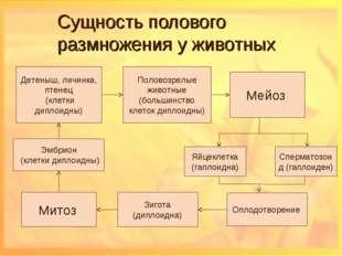 Сущность полового размножения у животных Детеныш, личинка, птенец (клетки дип