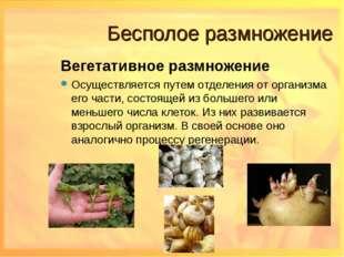 Бесполое размножение Вегетативное размножение Осуществляется путем отделения