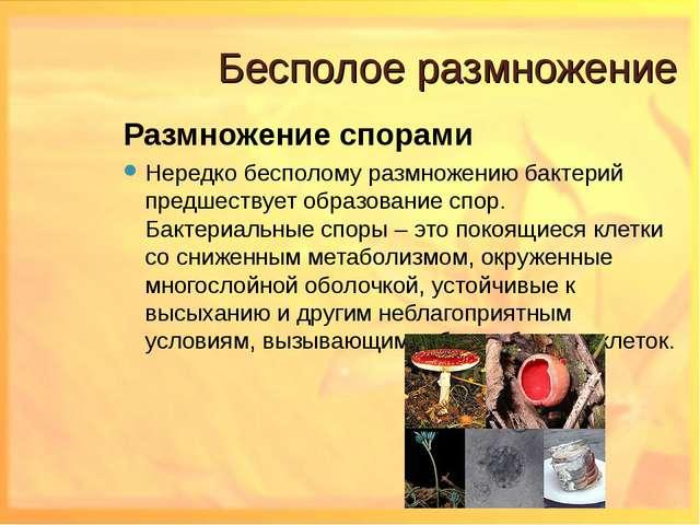 Бесполое размножение Размножение спорами Нередко бесполому размножению бактер...