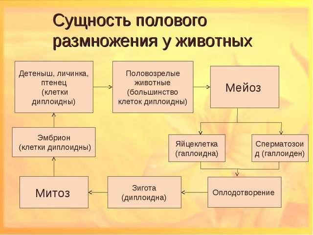 Сущность полового размножения у животных Детеныш, личинка, птенец (клетки дип...