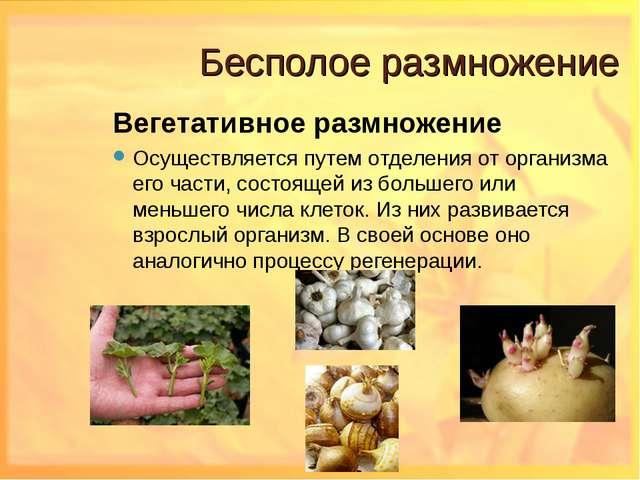 Бесполое размножение Вегетативное размножение Осуществляется путем отделения...