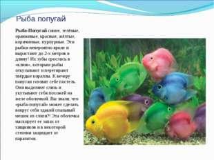 Рыба попугай Рыба-Попугай синие, зелёные, оранжевые, красные, жёлтые, коричне