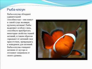 Рыба-клоун Рыбы-клоуны обладают удивительной способностью - они живут в самой