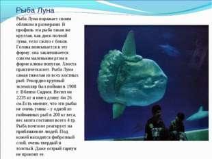 Рыба Луна Рыба Луна поражает своим обликом и размерами. В профиль эта рыба та