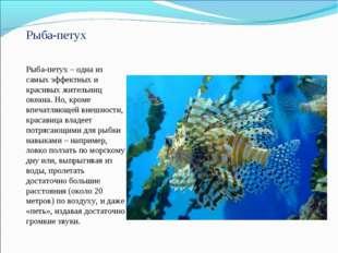 Рыба-петух Рыба-петух – одна из самых эффектных и красивых жительниц океана.