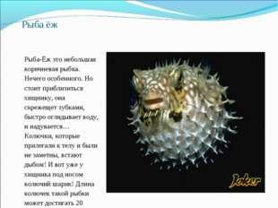 Рыба ёж Рыба-Ёж это небольшая коричневая рыбка. Нечего особенного. Но стоит п