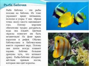 Рыба бабочка Рыба бабочка - эти рыбы похожи на бабочек. Их тоже украшают ярки