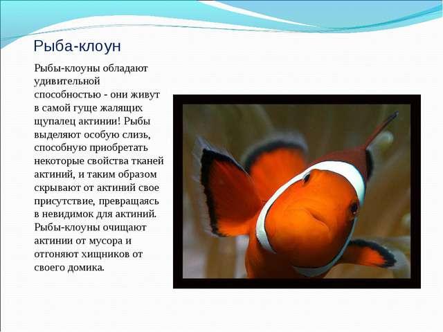 Рыба-клоун Рыбы-клоуны обладают удивительной способностью - они живут в самой...