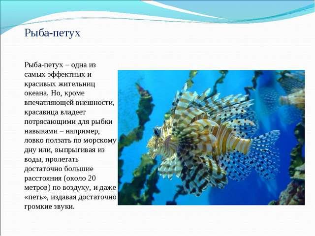 Рыба-петух Рыба-петух – одна из самых эффектных и красивых жительниц океана....