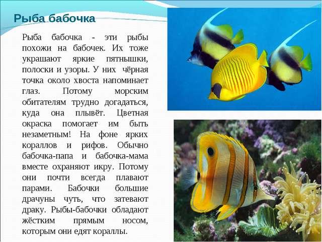 Рыба бабочка Рыба бабочка - эти рыбы похожи на бабочек. Их тоже украшают ярки...