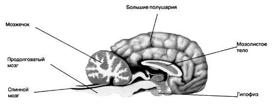 http://podelise.ru/tw_files2/urls_409/9/d-8742/8742_html_41c88af2.jpg
