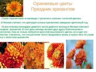 Оранжевые цветы Праздник хризантем Слово «хризантема» в переводе с греческого