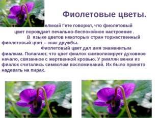 Фиолетовые цветы. Великий Гете говорил, что фиолетовый цвет порождает печаль