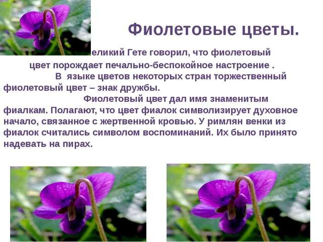 Фиолетовые цветы. Великий Гете говорил, что фиолетовый цвет порождает печаль...