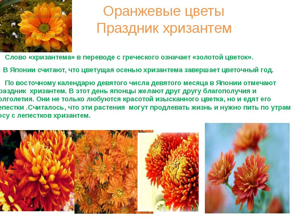 Оранжевые цветы Праздник хризантем Слово «хризантема» в переводе с греческого...