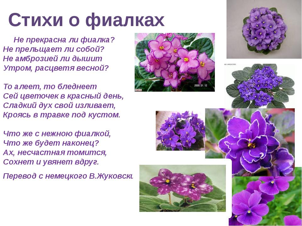 "Презентация ""Цветы мира"" по МХК 11 класс"