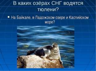 В каких озёрах СНГ водятся тюлени? На Байкале, в Ладожском озере и Каспийском