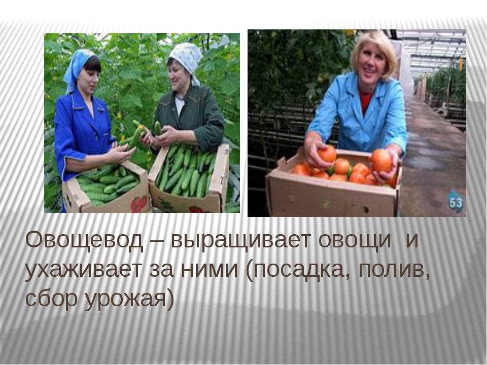 Овощевод – выращивает овощи и ухаживает за ними (посадка, полив, сбор урожая)