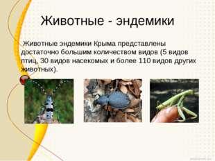 Животные - эндемики Животные эндемики Крыма представлены достаточно большим к