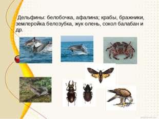 Дельфины: белобочка, афалина; крабы, бражники, землеройка белозубка, жук оле