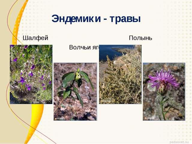 Эндемики - травы Шалфей Полынь Волчьи ягоды Василек