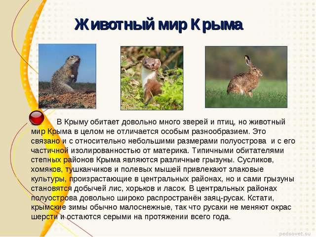 Животный мир Крыма В Крыму обитает довольно много зверей и птиц, но животный...
