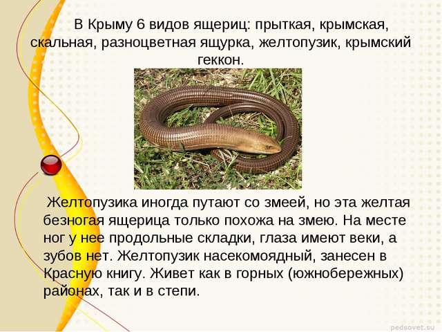 В Крыму 6 видов ящериц: прыткая, крымская, скальная, разноцветная ящурка, же...