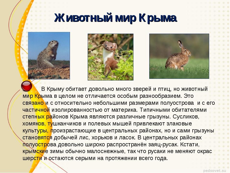 Презентация к уроку окружающий мир в классе на тему quot Мой  слайда 21 Животный мир Крыма В Крыму обитает довольно много зверей и птиц но животный