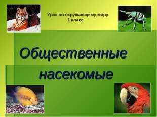 Общественные насекомые Урок по окружающему миру 1 класс
