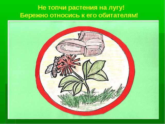 Не топчи растения на лугу! Бережно относись к его обитателям!