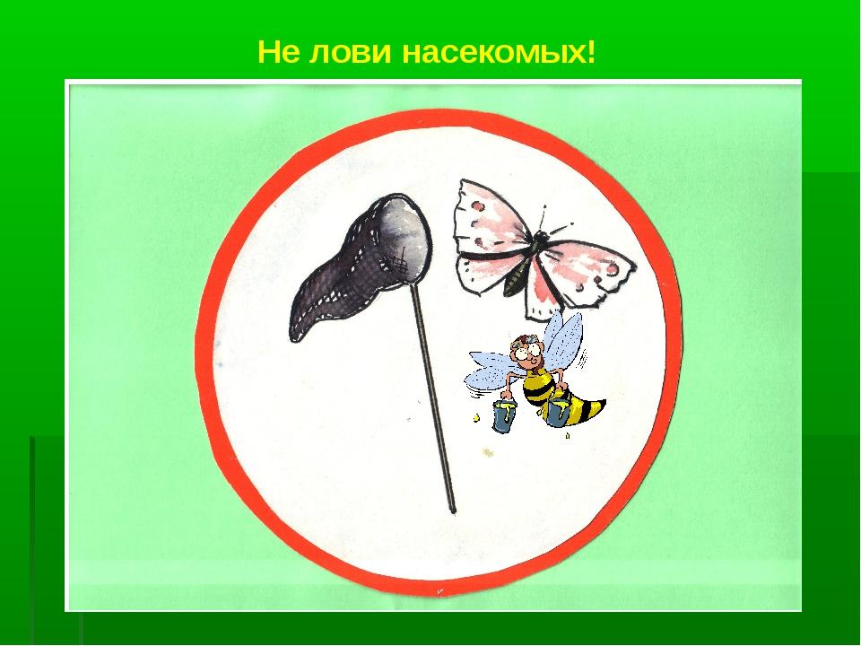Не лови насекомых!