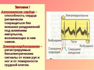 Запомни ! Автоматизм сердца – способность сердца ритмически сокращаться без в