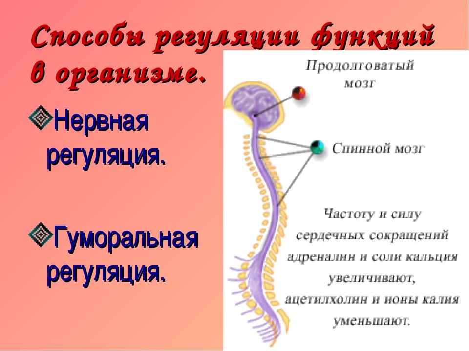 Способы регуляции функций в организме. Нервная регуляция. Гуморальная регуляц...