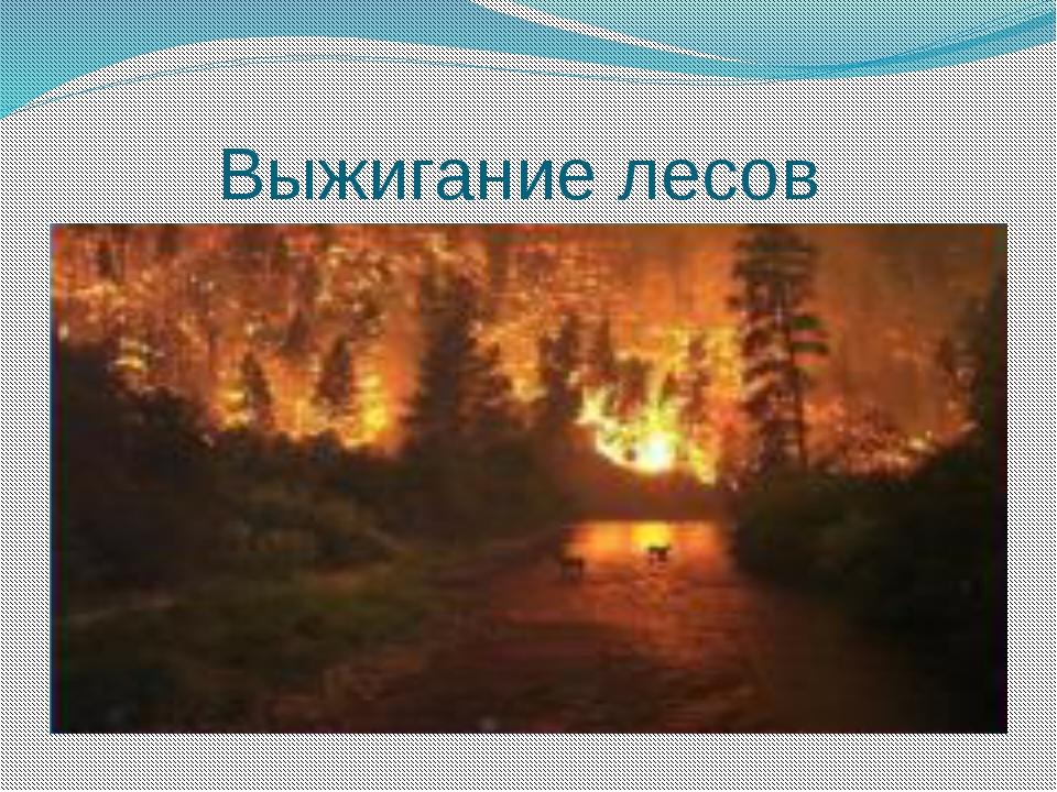 Выжигание лесов