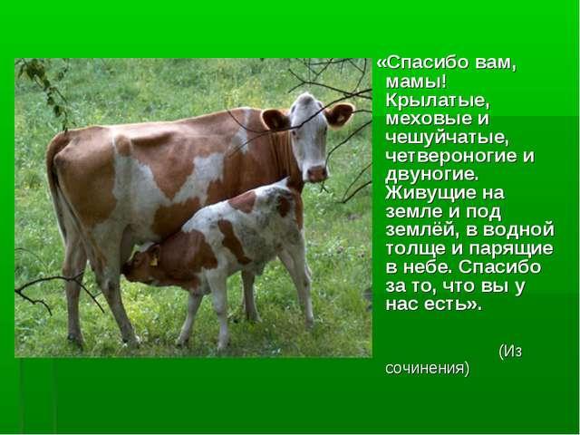 «Спасибо вам, мамы! Крылатые, меховые и чешуйчатые, четвероногие и двуногие....